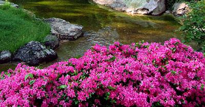 FLOWER GARDEN STREAM