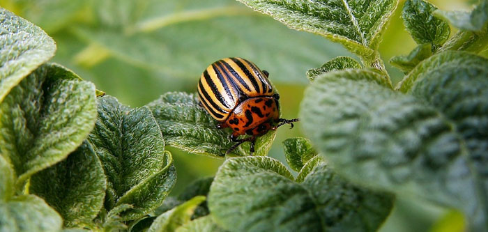 Nine Tips for Eco Friendly Garden Pest Control