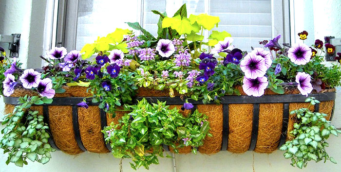 window box ideas & Window Box Designs (PICTURES)