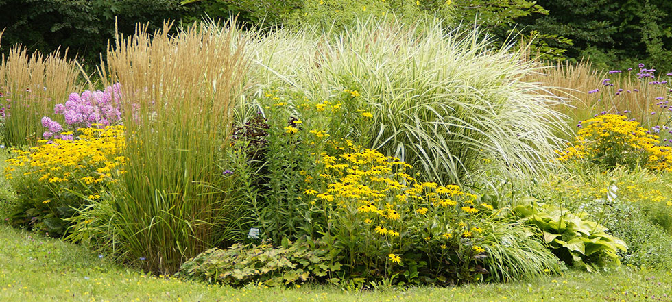 Landscaping designs 21 new ideas for landscaping photos for Landscape design using ornamental grasses