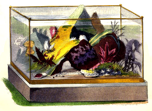 "PLAINLY MOUNTED ANTIQUE AQUARIUM From ""Ocean Gardens"" by H. Noel Humphreys, 1857."