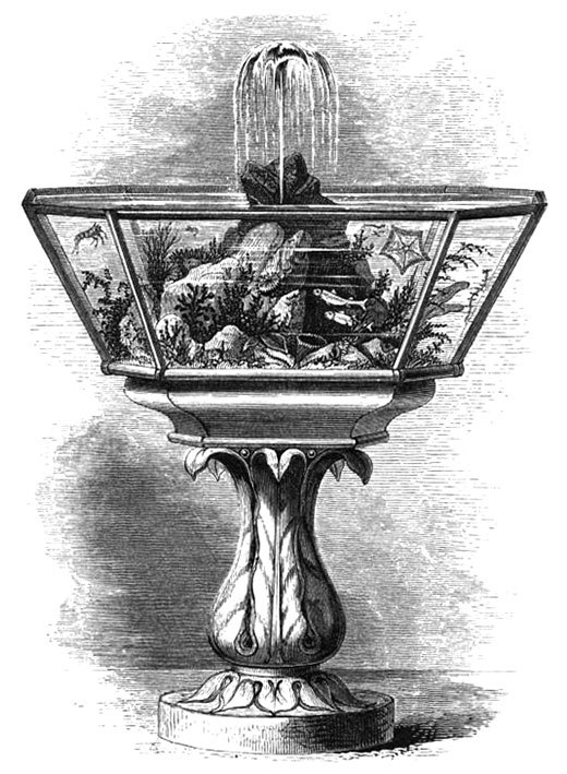 "19th CENTURY FOUNTAIN AQUARIUM From ""A handbook to the marine aquarium"" by Philip Henry Gosse, 1855."